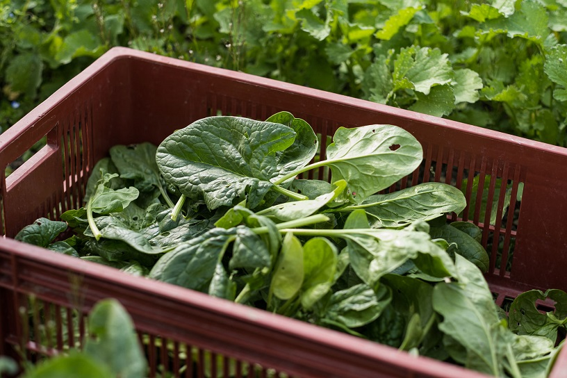 Scientists Taught Spinach How To Send Emails To Help Fight Climate Change