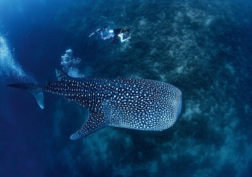 Maldives Namrata Purohit