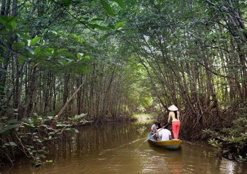 Asia Mangrove forests