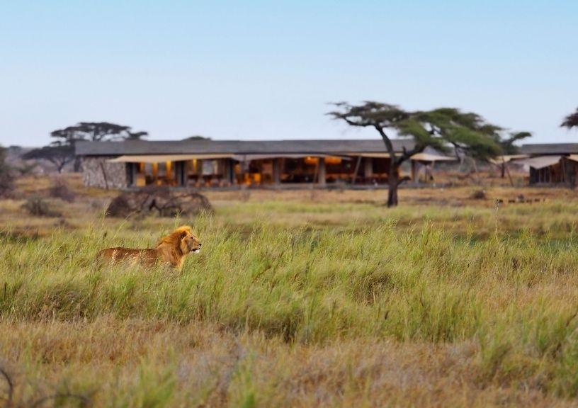 Year to Take a Safari