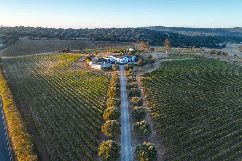Portugal's wine