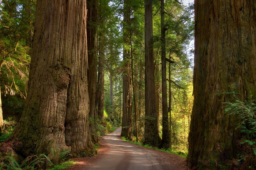 Redwood National and State Parks, United States