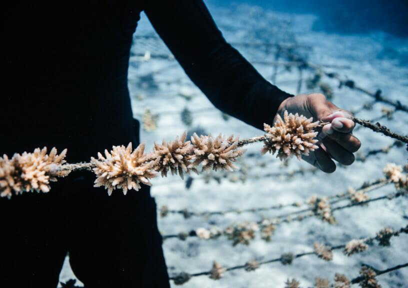Coral gardeners